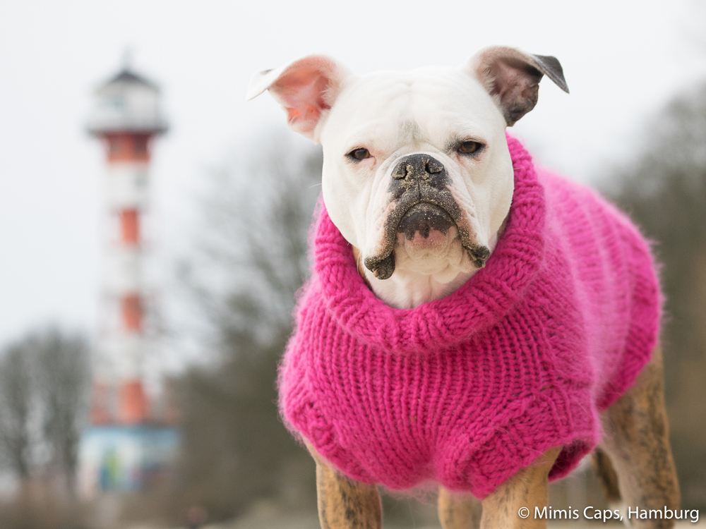 DSC058-hunde-pullover-bulldogge-Strickpullover-dogs-pink